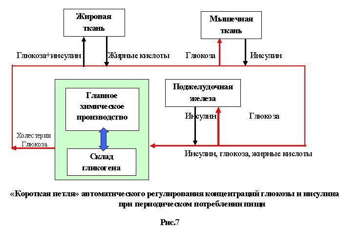 Www russkoe nopho tv